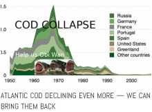 Cod_collapse_story_snip1