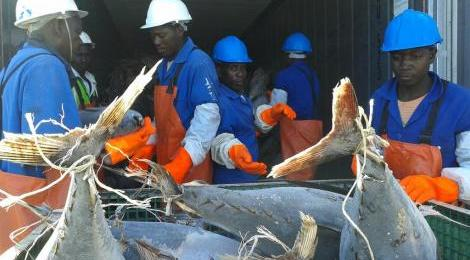 namibia tuna workers