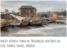 The real trouble with tuna pastures off the coast of West Africa comes from CO2 caused 'global greening' of the African Sahel