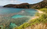 Oahu's Hanauma Bay corals can be saved
