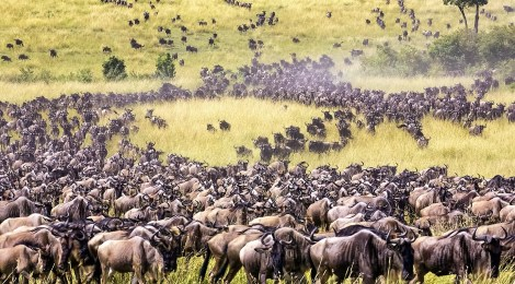 grass sustains life in Africa