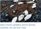 Alaska seabirds starving at sea