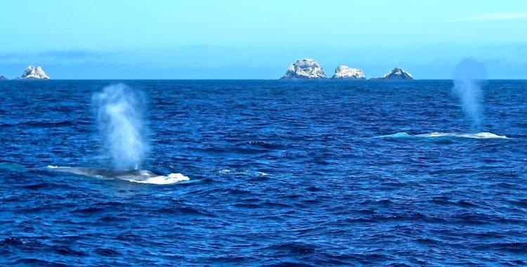 blue whales near san francisco