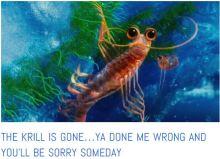 southern ocean krill is gone