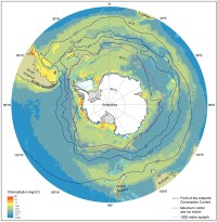 southern ocean plankton collapse