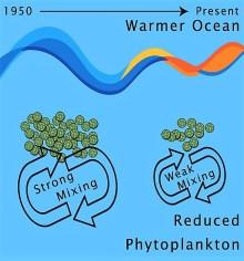 Ocean warming pasture decline