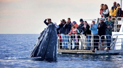 Watch Them Unto Death, Whale Watching Soars Past $2 Billion Per Year