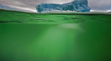 Ocean Pastures Bloom When Iron Arrives With Greenland Icy Meltwater