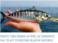 tuna in peril story snip