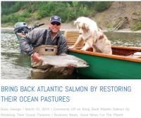 Scotland and Atlantic salmon
