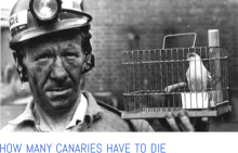 how many canaries must die