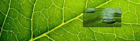 leaf and stomata