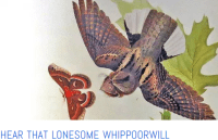 lonesome whippoorwill