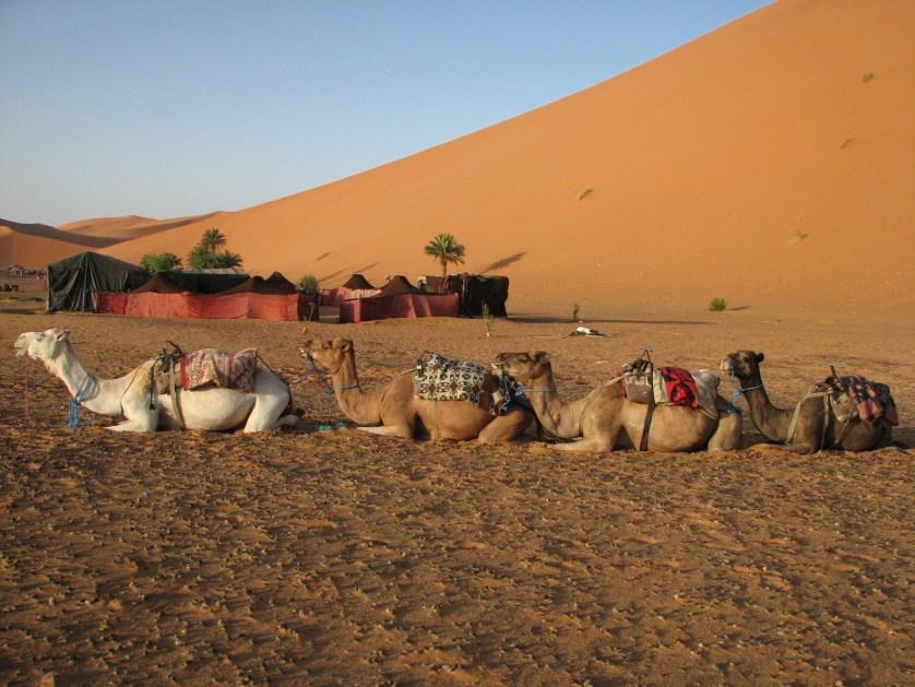 sahara-desert-3