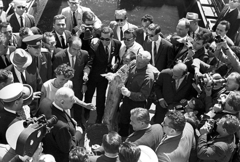 Вручение президенту Франции Шарлю де Голлю двухпудового осетра во время осмотра Волжской ГЭС. Июнь 1966 года
