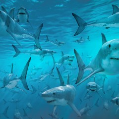 Fishing Prohibitions Produce More Sharks Along With Problems For Fishing Communities