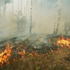 Almost 16,000 hectares of forest on fire in Russia