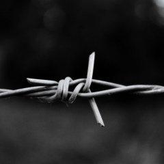 Ложь Сената и подлость Мацаревича: Волынский геноцид без убийц и спасителей