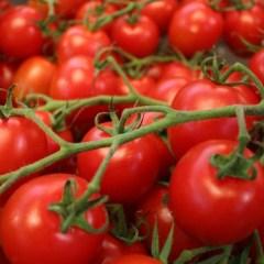 Russians miss Turkish tomatoes