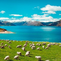 В Новой Зеландии устроят геноцид опоссумам, хорькам и котикам