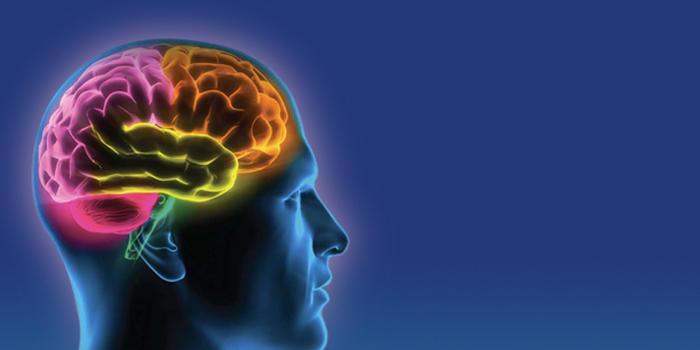 Ученые нашли новые отличия между мозгом обезьяны и человека