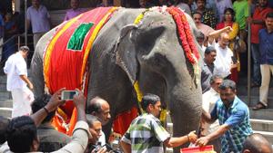 kerala-elefante-ow