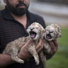Animals rescued from Gaza, moved to South Africa