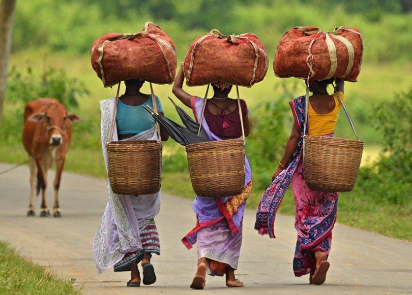 Женщины несут мешки с чаем на плантации в северо-восточном штате Ассам, Индия.