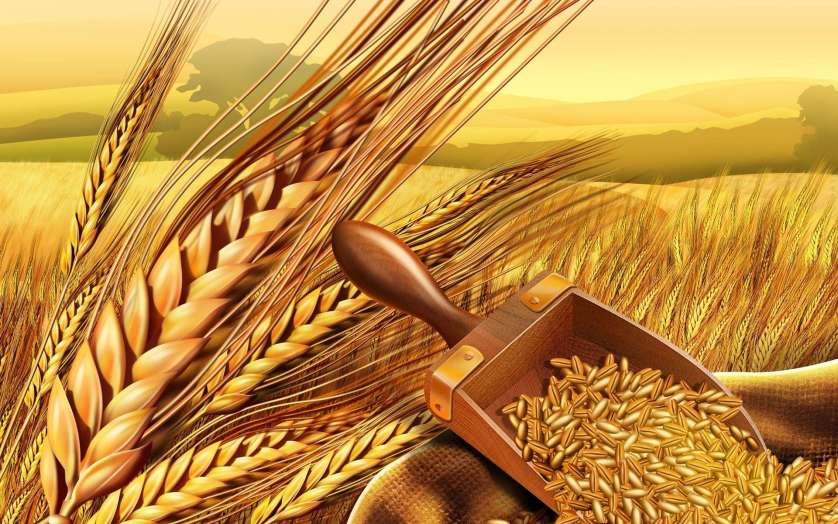 Урожай зерновых в южных регионах России выше, чем 2016 году, несмотря на непогоду