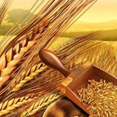 Bloomberg: Россия возвращает себе статус «зерновой сверхдержавы»