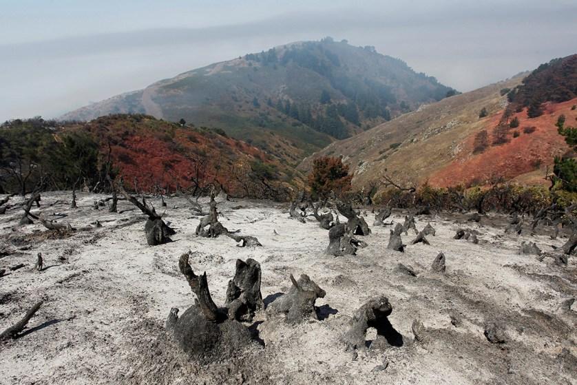 california-wildfires-sand-soberanes-fire (4)