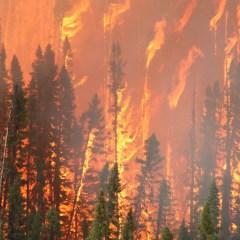 Лесные пожары предложили расстреливать из гаубиц