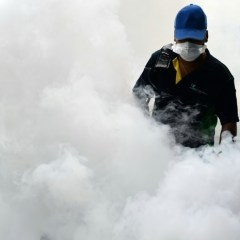 Malaysia reports first locally transmitted Zika case