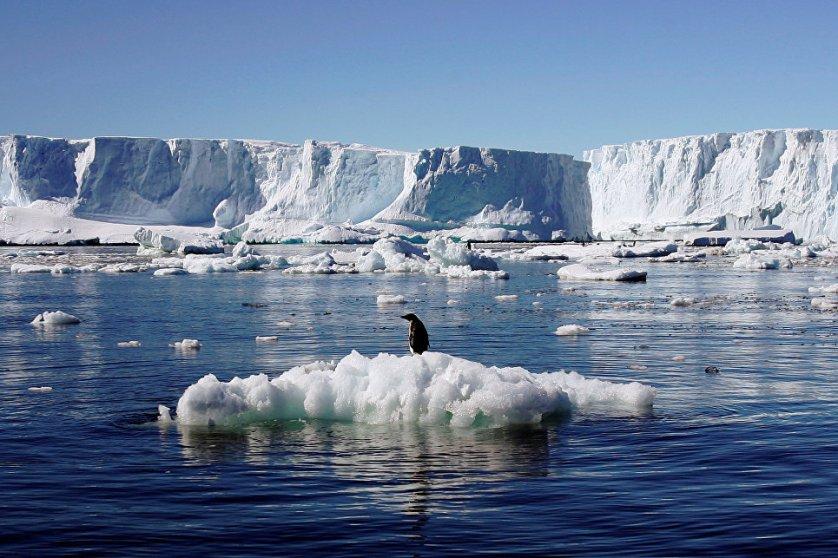 Пингвин Адели гнездится на побережье Антарктиды и ближайших к материку островах: Южных Шетландских и Оркнейских.