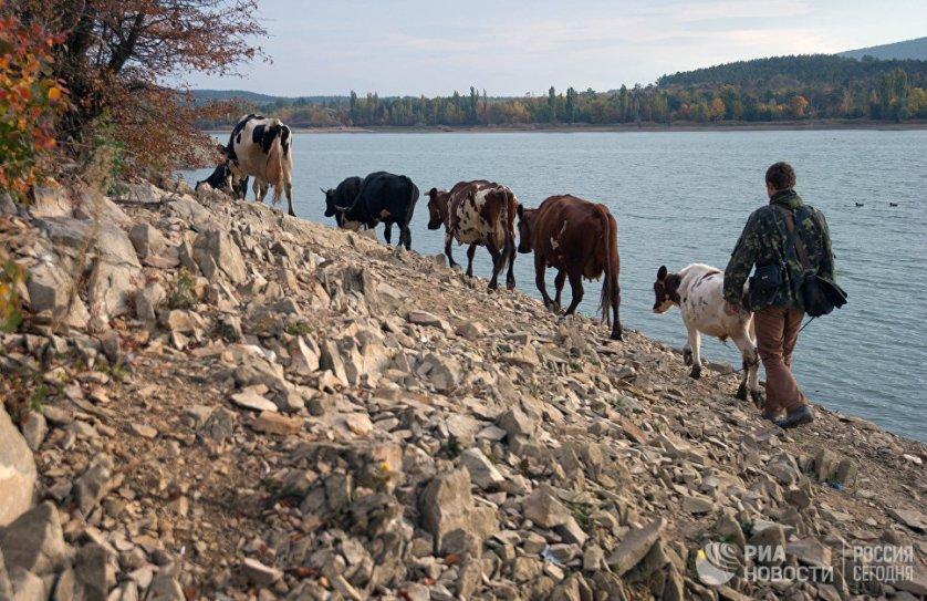 На берегу Симферопольского водохранилища в селе Лозовое.