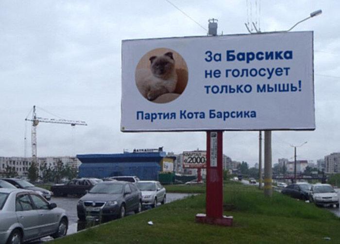 Кот-политик Барсик выдвинет свою кандидатуру на выборах президента Российской Федерации