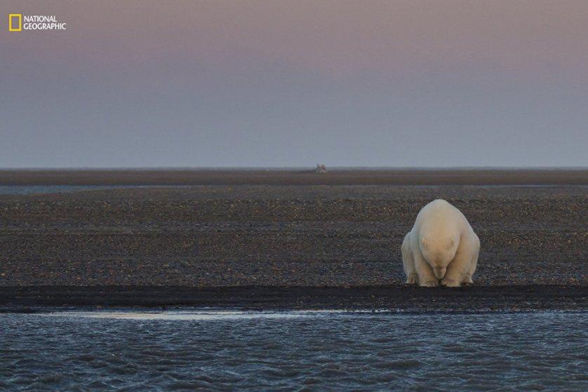 """Работа фотографа Patty Waymire """"Ни снега, ни льда?""""."""