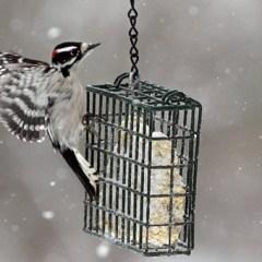 Орнитологи призвали уничтожать кормушки для птиц