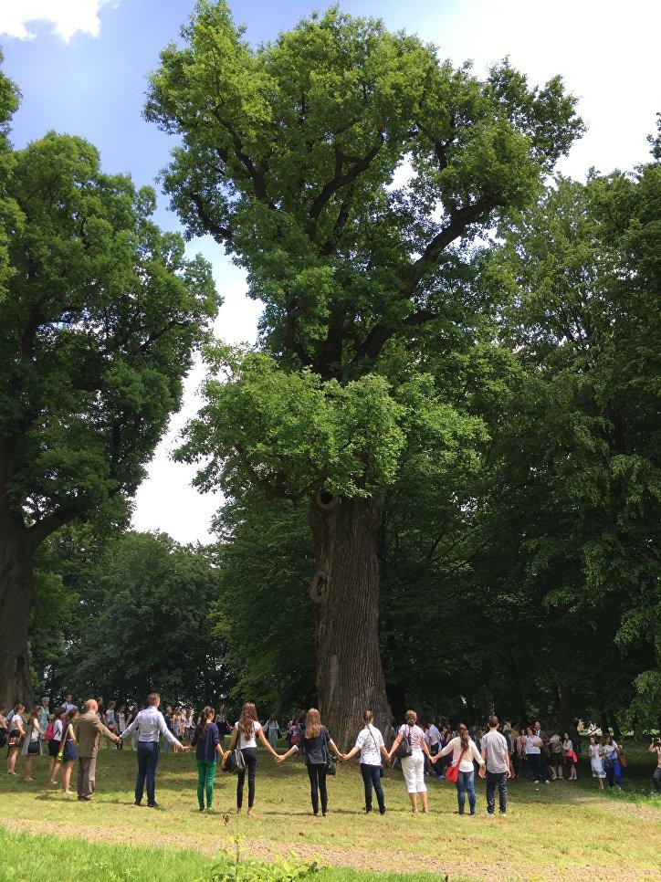 Главным деревом года в Европе стал польский дуб Йозеф. На данный момент он является одной из достопримечательностей Польши.