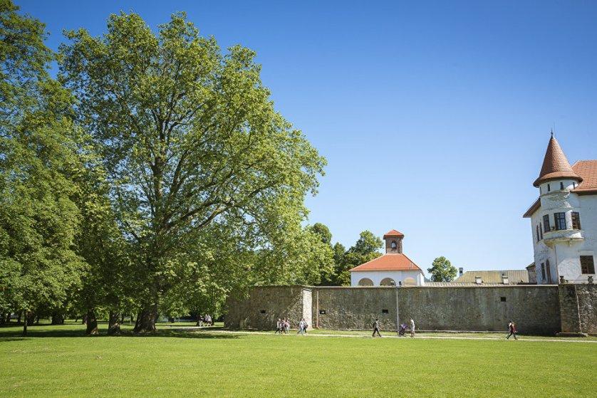Восточный платан, растущий рядом с Будатинским замком в Словакии, занял девятое место конкурса. Это самое большое дерево, растущее в парке, основанном еще в 1745 году. Рядом с этим платаном стоит дерево поменьше, кажется, что они не связаны, но на самом деле их корни плотно переплетены.
