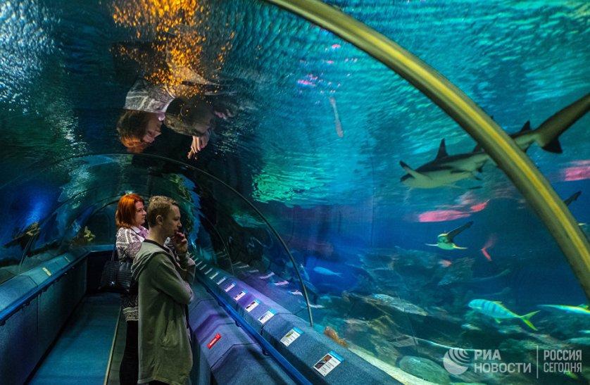 Океанариум работает с 2006 года и является одной из достопримечательностей Санкт-Петербурга.