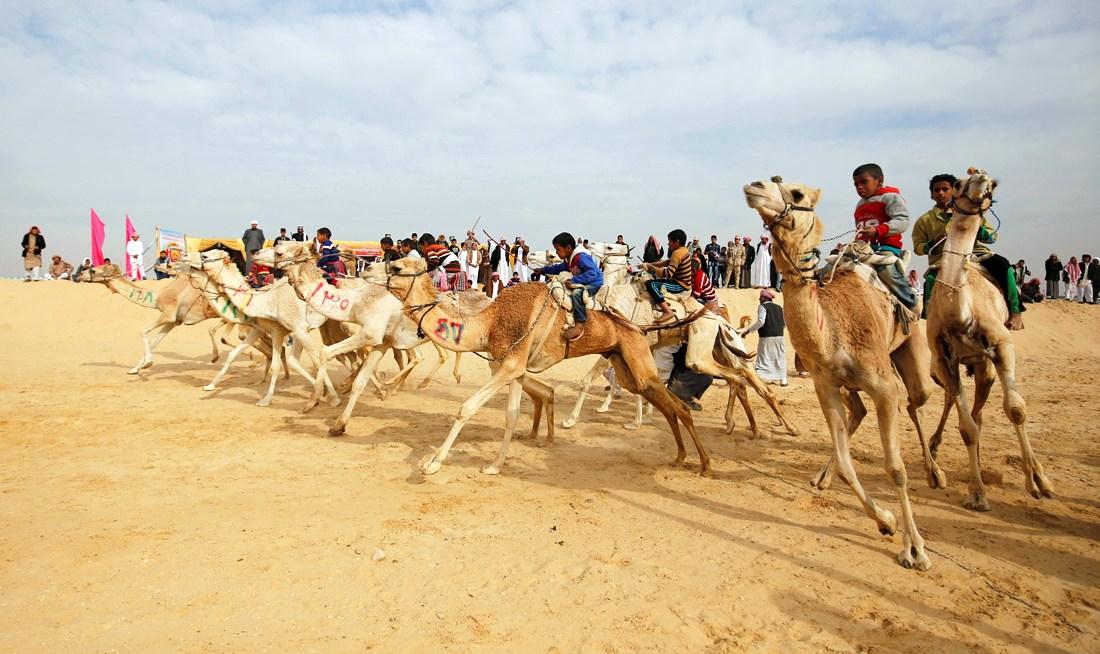 В качестве жокеев на скачках выступают мальчики в возрасте 11 лет или младше. Это позволяет верблюдам не испытывать дополнительной нагрузки и быстрее устремляться к финишу.