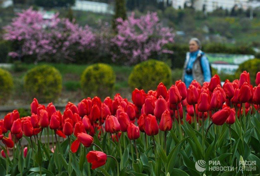 Цветение тюльпанов можно будет наблюдать в Никитском ботаническом саду до середины мая.