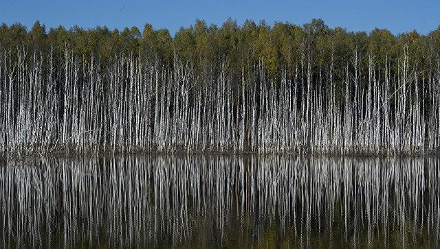 Более трети россиян заметили ухудшение экологии в стране, показал опрос