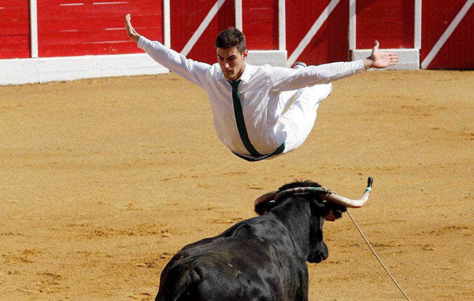 Участник корриды Course landaise во Франции прыгает через быка.