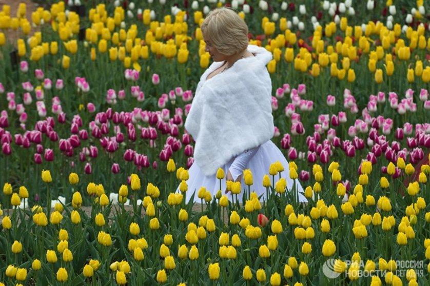 Из всех представленный на параде видов тюльпанов 170 - иностранной селекции, а 19 выведены специалистами ботанического сада.