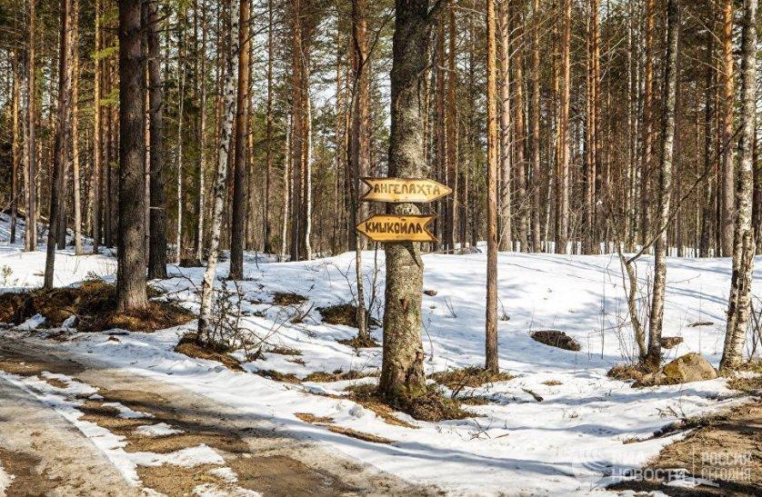 Возле поселков Лахта, Чуйнаволок, Курмойла и Кудома археологи нашли следы производства бронзовых изделий. На фото: указатель на развилке лесных дорог в Пряжинском районе Карелии.
