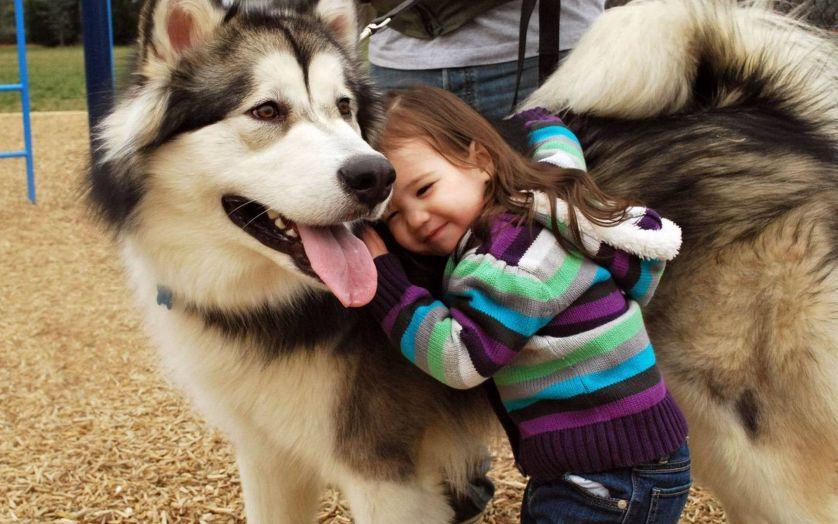 Правда ли, что собаки помогают детям справляться со стрессом?