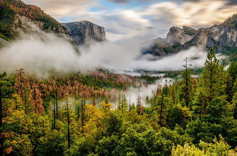 В США леса начали двигаться из-за изменения климата