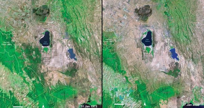 Похожая история произошла в кенийском Национальном парке Накуру-Лейк. Фотографии были сняты в 1973 и 2000 годах. © NASA